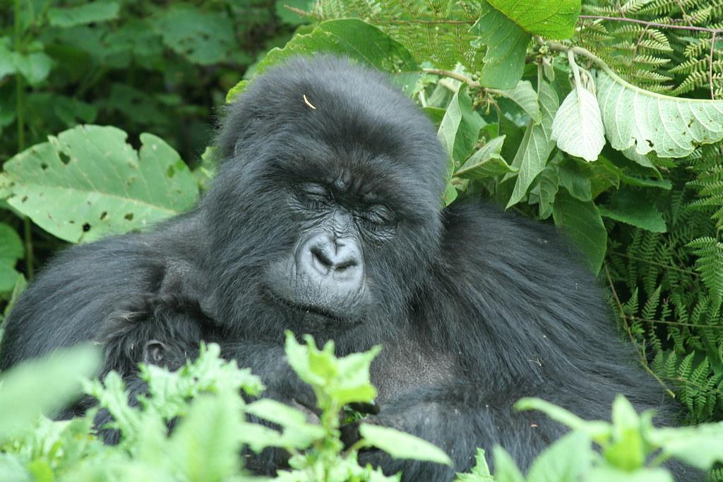 Rwanda054