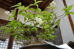 shrub(0.0), tree(0.0), floristry(0.0), flower(1.0), branch(1.0), plant(1.0), herb(1.0), houseplant(1.0), flora(1.0), produce(1.0), bonsai(1.0),