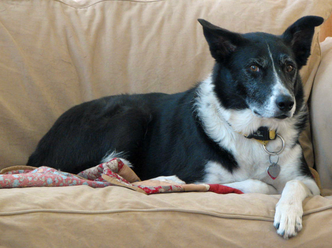 Jake june 22 2008 jake lying on the living room couch for Living room jake miller