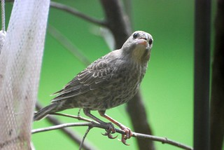 Visitor - Bird