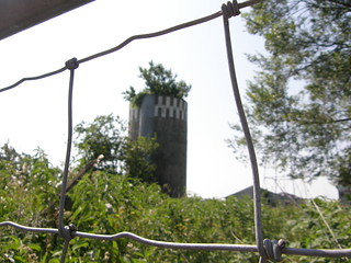 Silo tree thru the fence