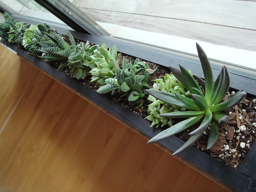 succulent planter blue ant studio. Black Bedroom Furniture Sets. Home Design Ideas