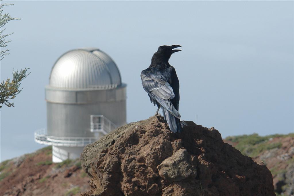 Los cuervos imperan la cumbre de la Caldera de Taburiente ... son los únicos perturbadores del increíble cielo estrellado que se puede ver desde los Observatorios Astronómicos del Roque de los Muchachos Roque de los Muchachos, donde europa se une con el cielo - 2817133543 04ceb5f984 o - Roque de los Muchachos, donde europa se une con el cielo