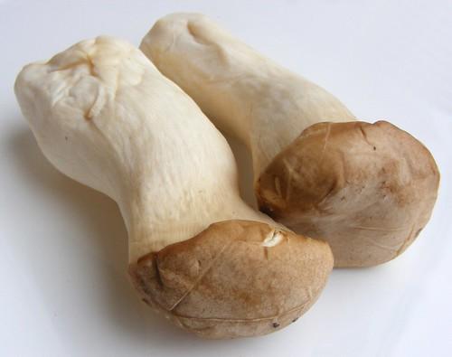 King Oyster Mushroom or King trumpet mushroom