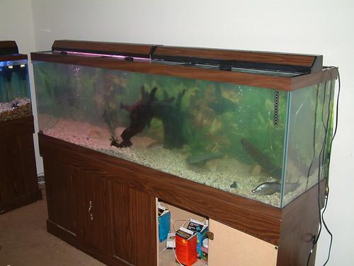Tanks for the memories 135 gallon fresh water preditor for 200 gallon fish tank dimensions