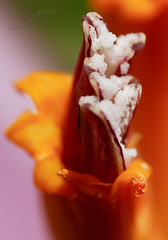 592-50a Banana Flower Detail - Up Close and Personal