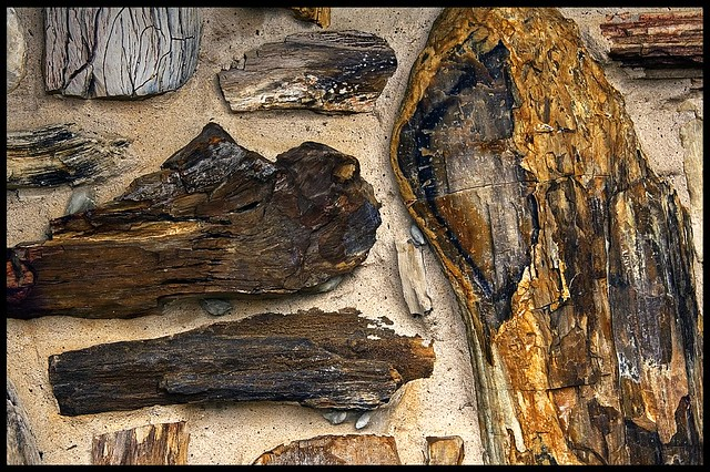 Petrified Wood   Flickr - Photo Sharing!