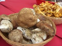 vegetable, mushroom, agaricaceae, produce, food, dish, matsutake, edible mushroom, shiitake, tuber,