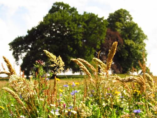 Wild Flowers on Hampstead Heath