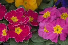 macro photography(0.0), annual plant(1.0), flower(1.0), yellow(1.0), plant(1.0), flora(1.0), herbaceous plant(1.0), petal(1.0),