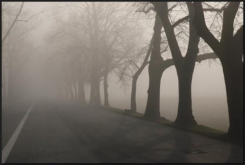 road morning trees misty geotagged sunday supershot dzwjedziak impressedbeauty geo:lat=50061044 geo:lon=19912258