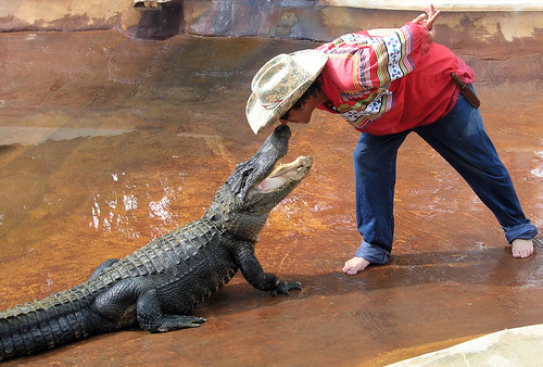 Kissing an Alligator at the Big Cypress Seminole Tribe, Ft. Lauderdale