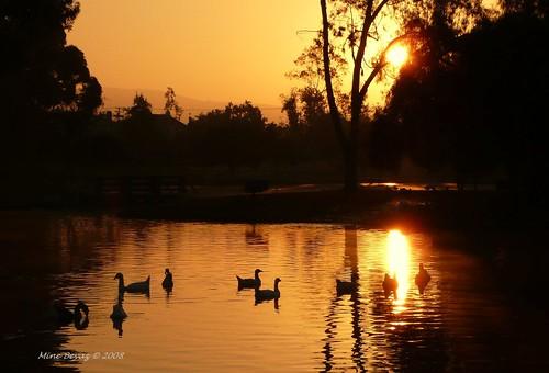 california park orange sunrise placentia reflexions fullerton brea supershot mywinners anawesomeshot aplusphoto infinestyle theunforgettablepictures gundogumu grouptripod águasdivinas