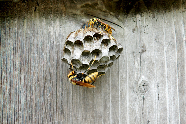 Tsumago insects 2