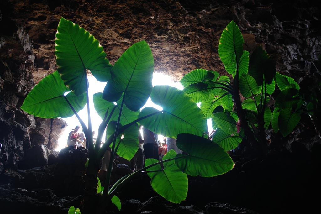 interior de la cueva de los verdes en Lanzarote lugares que visitar en lanzarote - 2692507754 f5f27d05e2 o - 5 increíbles lugares que visitar en Lanzarote