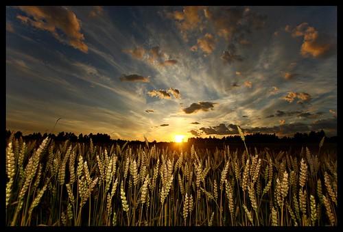 sunset sky nature beautiful clouds dark moody surreal masterphotographer weat blueribbonwinner mywinners abigfave anawesomeshot colorphotoaward goldstaraward damniwishidtakenthat lesamisdupetitprince artinoneshot blogosophy mackepackeblogspotcom —obramaestra—