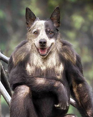 Funny Animal Hybrids