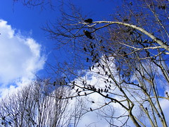 under the Sintra blue sky