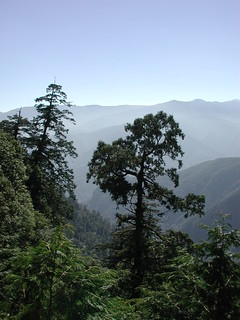 Divine (old) Trees in Chilanshan (DSCN0517)