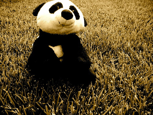 optimistic panda loves to frolic in the grass