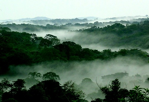Mist among trees in Congo  Photo by Scott Thompson, World Resources Institute, 2008.