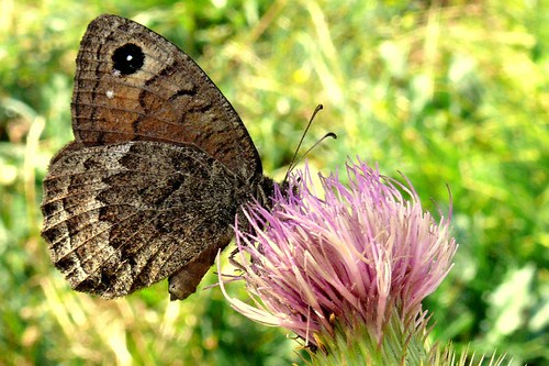 Butterfly in The Pyrenees