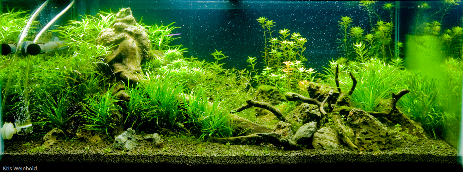Welcome to the blog aquascape gallery - Gallery aquascape ...