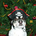 2008-12-09 - FSM Dogs (Peedee Pirate) - 0005 [4x6]