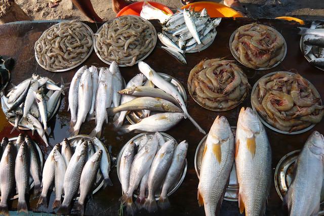 fish market, fort kochi