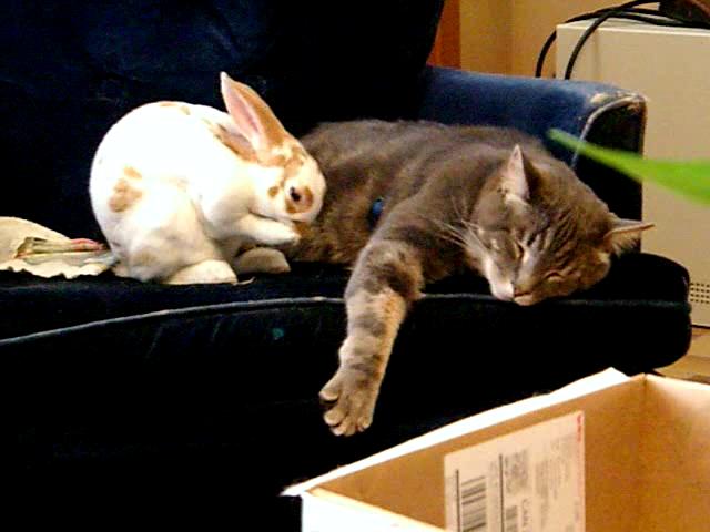 Rabbit and cat LOVE