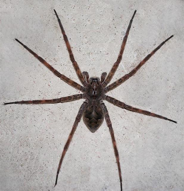 Barn Funnel Weaving Spider Flickr Photo Sharing