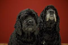 Kipper & Bo - Black on Red