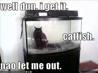 lol catfish