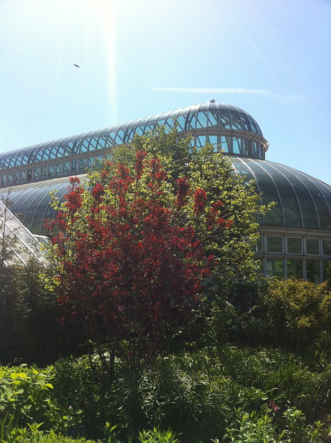 Brooklyn Botanical Garden