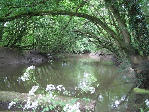 The River Mole