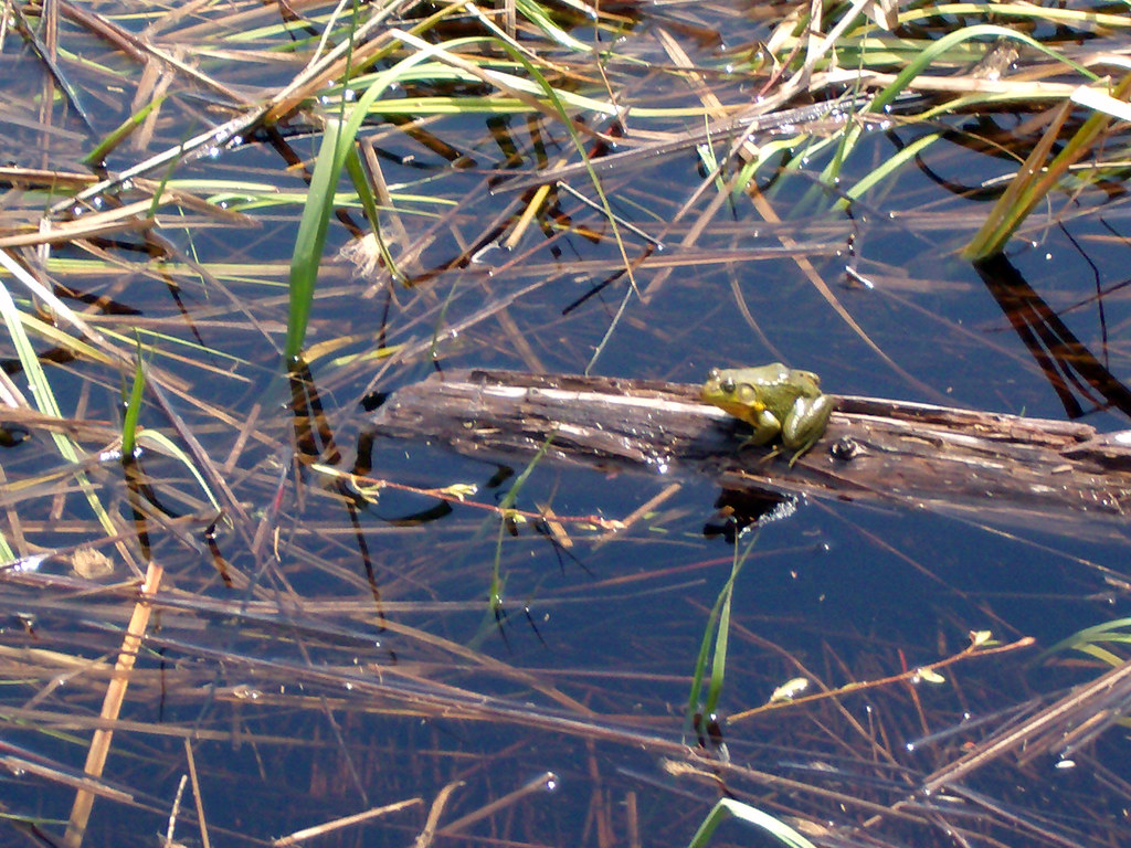 Frog Catching in Rencontre East