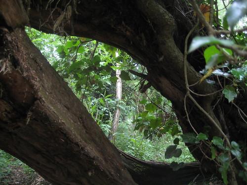 Parallelogram in nature