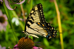 Butterfly on flower-2 by BrianAkersPhotography.com