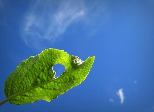blue summer sky cloud macro green apple nature canon suomi finland way leaf heart maria images sue thursday kesä lehti kerimäki luonto laakso omena mywinners canonpowershota710is pinoykodakero marialaakso sue323 imagoism imagothursday