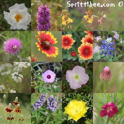 tx-wildflowerz