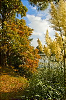 Golden pines & Pampas