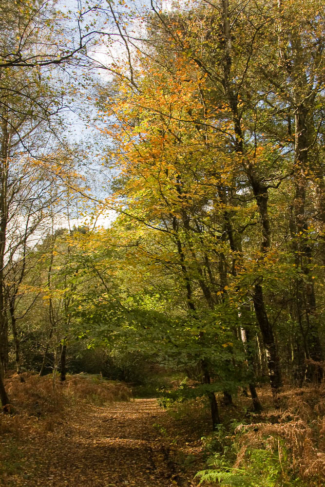 Woodlands near Leith Hill