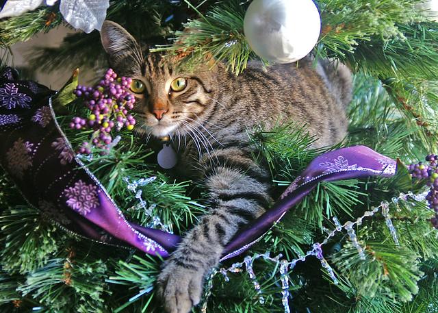 We've got a rather unique tree ornament.