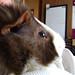 Small photo of Cowlick