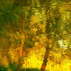 morning's gate on my wild river…!!! / porte du matin sur ma rivière sauvage…!!!