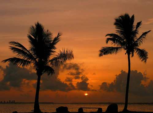travel trees vacation orange sun holiday water silhouette set skyline swimming sunrise landscape dawn bay twilight key cityscape florida fireworks miami dusk 4th july tourist palm land tropical caribbean rise scape biscayne joiseyshowaa joiseyshowa