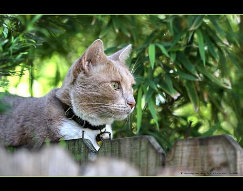 explore kissablekat bestofcats goldstaraward