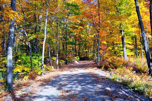 fall leaves d90 saffinspond