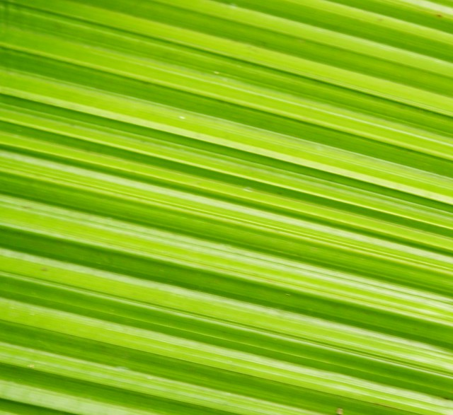 TEXTURA VERDE | Flickr - Photo Sharing!