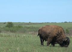 Prairie State Park - Missouri